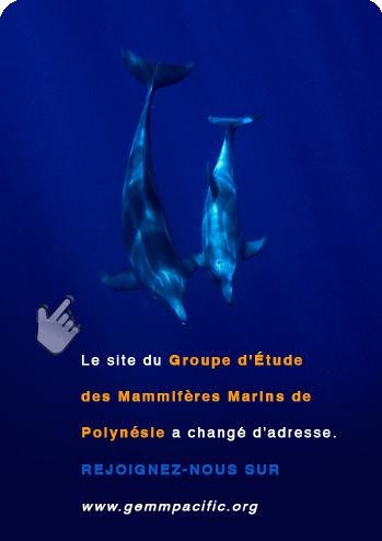 Groupe d'Étude des Mammifères Marins de Polynésie